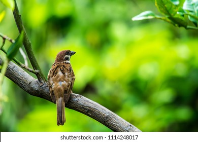Sparrow on the tree