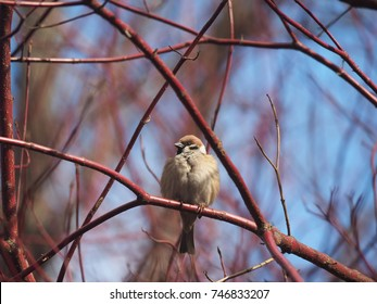 sparrow on a tree in the forest