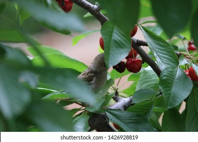 2f0328ad Sparrow on the tree in summer time, small birds outside. Little bird on the