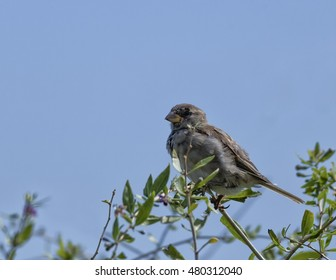 Sparrow perched in a bush watching