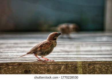 Sparrow perched on a bench