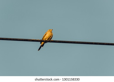 Sparrow perched on an electric cable