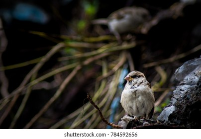 A sparrow resting on a rock