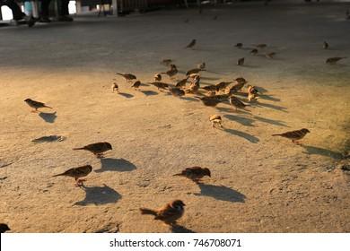 sparrow. Selective focus