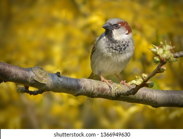 Sparrow sits on branch