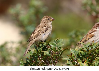 the sparrow sits on a branch and sings songs