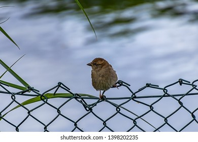 sparrow sitting on a fence