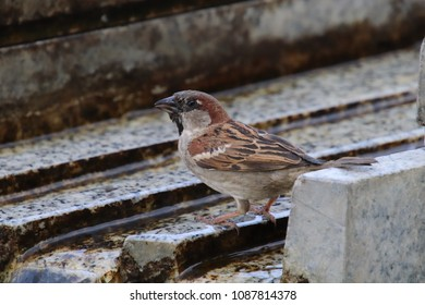 sparrow sitting at water