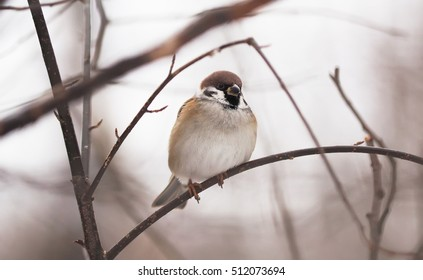 sparrow in the woods