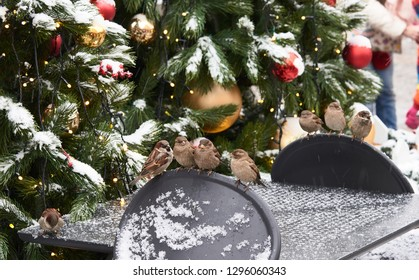 Sparrows on the back of a chair against the Christmas tree