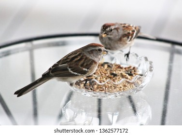 Sparrows sharing birdseed on a warm summer day.