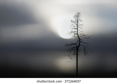Sparse image with silhouette of bare tree and lake at sunset in background