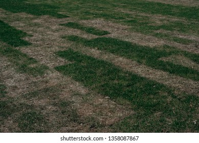 Sparse and small grass. Unfolded land rolls with green grass, grass is very bad quality. Bad gardening