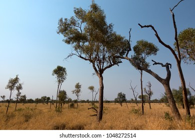 Sparse trees and grasses with smoky sky in the outback of the Northern Territory in Australia