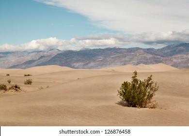 Sparse vegetation at the Mesquite flat dunes in Death valley
