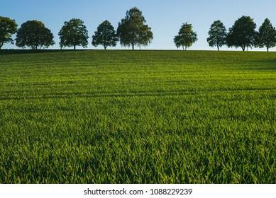 Spaziergang über Felder und Wald