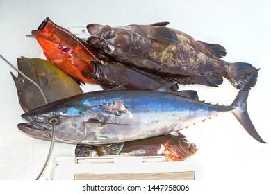 Indian Mackerel Images, Stock Photos & Vectors | Shutterstock