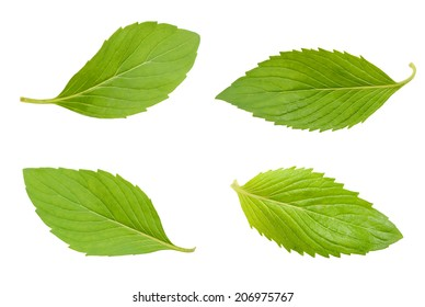 spearmint mint leaves isolated on white background