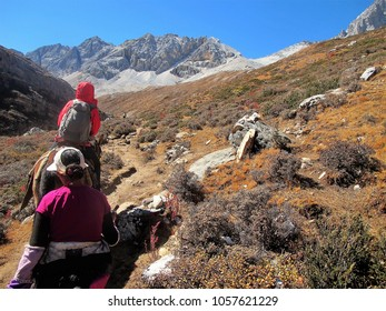 Special Horse Caravan at Yading Nature Reserve. a famous landscape in Daocheng, Sichuan, China.relax and freedom on mountain