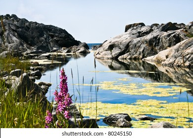 A special sea bay in the archipelago of Stockholm.