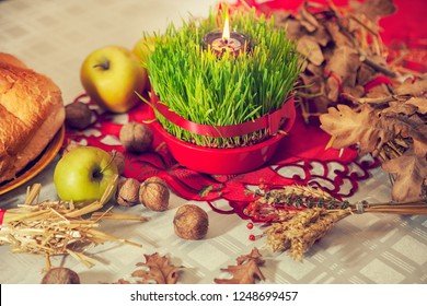 Specially planted wheat for the Christmas Day, as a part of the tradition by Orthodox Christmas in Serbia.