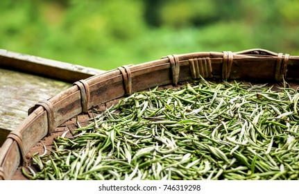Specially selected early in the morning fresh white tea leaves spread curing in bamboo basket tray after harvest.Chinese silver needle white tea of premium quality. Premium green tea leaves.