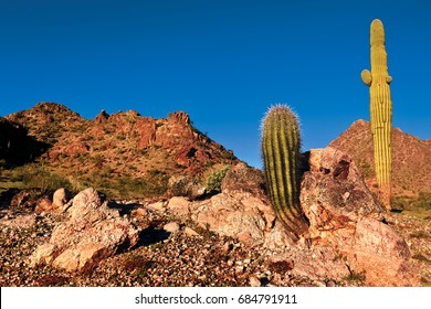 A species of Barrel Cactus growing out of an outcrop of rock with a tall Saguaro Cactus behind it near the Gila bend Mountains in southwestern Arizona. They can often grow in rocky terrain.