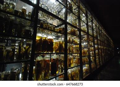 Species in Jar 2
