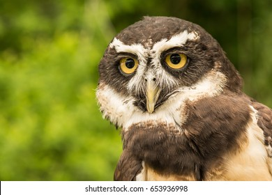 Eule Brille Stockfotos, Bilder und Fotografie   Shutterstock