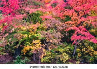 Spectacular autumn colors in a forest on the side of Lake Kawaguchi, one of the scenic five lakes - in the neighbourhood of Mount Fuji, Japan.