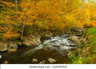 Spectacular Autumn leaves color on Little River in Smoky Mountains of Tennessee
