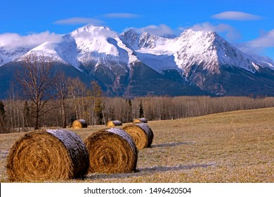 Spectacular Autumn Scenery after first snowfall with large hay bales in a farmers field and majestic Hudson bay Mountain Range and Kathlyn Glacier in the background.