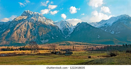 Spectacular Autumn Scenery with rugged snow-covered peaks of Roger de Boule Mountain Range with a meadow and a Cow watching near two old cabins  in the forground.