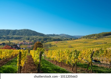 Spectacular autumn view of the vineyards around the Wine Road of Alsace, Eastern France