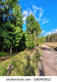 Spectacular green trees line the lefthand-side of a manmade path in the heart of the Forest of Dean. Distantly, more ancient trees can be seen lining the right, but the focus will always be drawn to