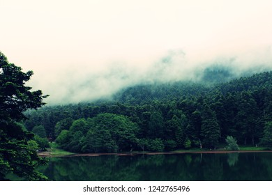 spectacular lake and forest views