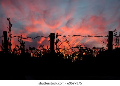 A spectacular midwest sunset appears to be captured by the silhouette of an old county barb wire fence.
