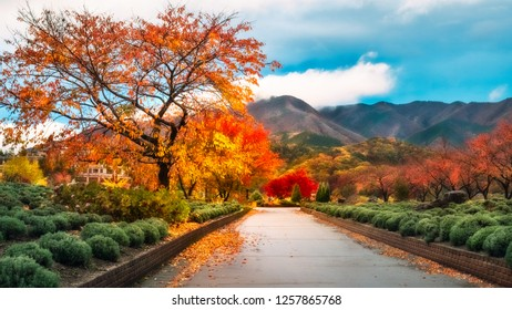 Spectacular nature after rain in autumn at a park in Fujikawaguchiko, a resort town on the side of Lake Kawaguchi, Japan.