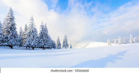 Spectacular panorama is opened on mountains,  trees covered with white snow,  lawn and blue sky with clouds.