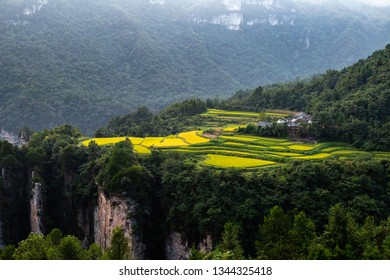 "Spectacular rice field terraces at sunset in front of Laowuchang village, in Yuanjiajie area of Wulingyuan National Park, Zhangjiajie, China. This national park inspired ""Avatar"" movie"