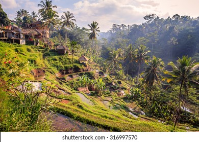 Spectacular rice fields in the jungle and the mountain near Ubud in Bali