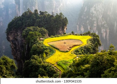 "Spectacular rice terrace, called the ""air garden"", in front of Laowuchang village, in Yuanjiajie area of Wulingyuan National Park, Zhangjiajie, China. This national park inspired ""Avatar"" movie"