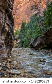 The spectacular and stunning Virgin River weaves through the Narrows, Zion National Park, USA, nobody in the image
