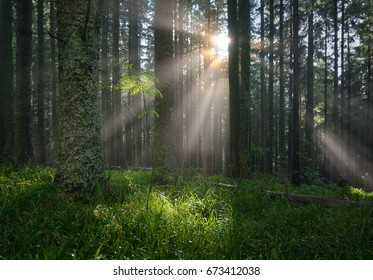 Spectacular summer landscape with bright sunbeams in foggy forest after heavy rain.