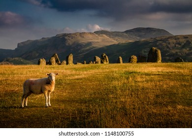 Spectacular view of Castlerigg stone circle with a sheep on a moody summer day in the Lake District Cumbria, United Kingdom.