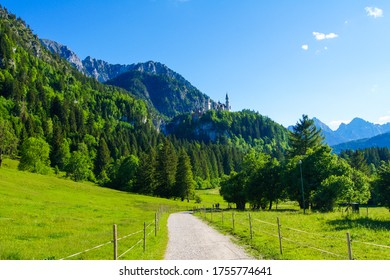 Spectacular view of Neuschwanstein Castle (Bavaria, Germany) surrounded by forested mountains and beautiful green forest and a path leading through green meadows in the front under a blue sky.