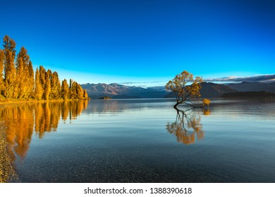 Spectacular view of sun rise on a frosty winter morning the famous Wanaka Tree and refection in autumn landscape with clear water, blue sky and mountain  at Lake Wanaka in Central Otago, New Zealand.