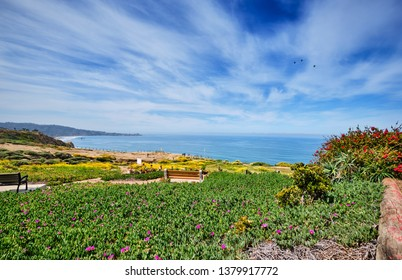 Spectacular view from Torrey Pines over the Spring wildflowers towards Scripps Pier and La Jolla cove