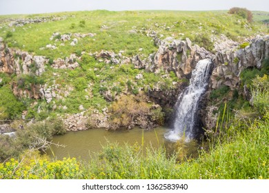 Spectacular water flow over the basalt canyon rocks and Iris Waterfall in the Golan heights, Zavitan River, Northern Israel. Spring time