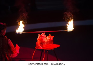 Speech of a cat in a circus. Training of cats. The cat rotates the stick with fire